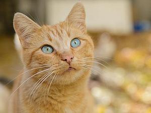 Дом с кошками. Жизнь продолжается ...   Ярмарка Мастеров - ручная работа, handmade