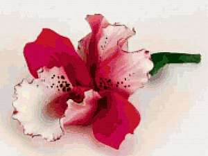 Мастер класс по сухому валянию на каркасе : брошь-цветок Орхидея   Ярмарка Мастеров - ручная работа, handmade