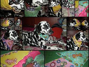 Архив моих работ(Банданы в технике роспись для собак). Ярмарка Мастеров - ручная работа, handmade.