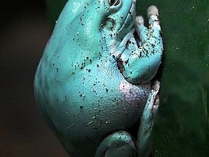 Дер лягушка по болоту дер шлеп, дер шлеп, дер шлеп | Ярмарка Мастеров - ручная работа, handmade