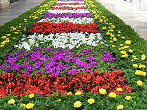 Вести с полей. Цветочных. | Ярмарка Мастеров - ручная работа, handmade