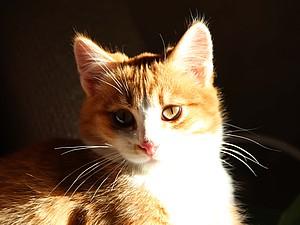Коты и шерсть :)   Ярмарка Мастеров - ручная работа, handmade