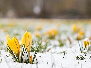 Весна! С 6 по 10 марта скидка 10% на все украшения, которые есть в наличии! | Ярмарка Мастеров - ручная работа, handmade