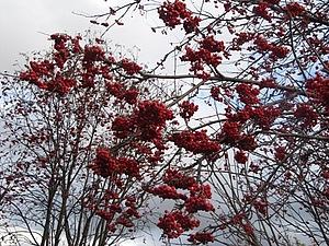 Осенние скидки | Ярмарка Мастеров - ручная работа, handmade