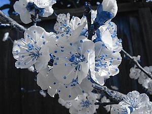 Язык цветов | Ярмарка Мастеров - ручная работа, handmade