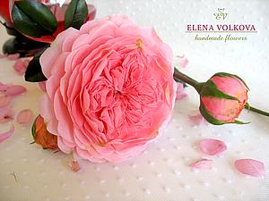 Фотосессия пионовидной розы. | Ярмарка Мастеров - ручная работа, handmade