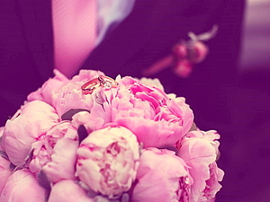 Восхитительная свадебная фотосессия. Комплект