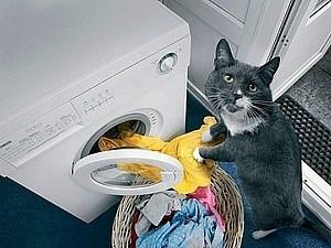 Идеальный  кот | Ярмарка Мастеров - ручная работа, handmade