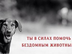 нужна помощь, собаки, бездомыши, собаки в беде