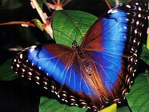 Красота и великолепие бабочек | Ярмарка Мастеров - ручная работа, handmade