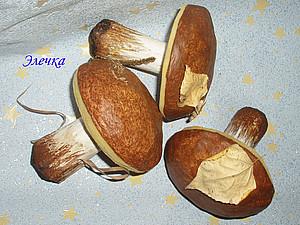 Грибы из папье-маше | Ярмарка Мастеров - ручная работа, handmade
