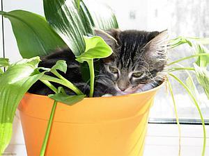 Доказательства того, что коты — это растения | Ярмарка Мастеров - ручная работа, handmade