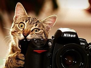 """""""Как сделать фото-процесс и фото-результат интересным"""" или """"Грызем гранит фотонауки"""". Ярмарка Мастеров - ручная работа, handmade."""