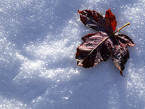 Скоро зима   Ярмарка Мастеров - ручная работа, handmade