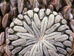 Необычные растения нашей планеты для вдохновения | Ярмарка Мастеров - ручная работа, handmade