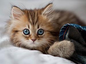 Котенок-очаровашка | Ярмарка Мастеров - ручная работа, handmade