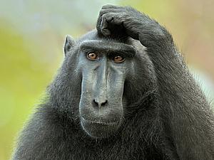 История 1:Девочка из зоопарка или как выжить в обезьяннике!..;)   Ярмарка Мастеров - ручная работа, handmade