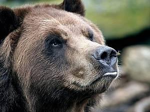 Лепим нос для медведя. | Ярмарка Мастеров - ручная работа, handmade
