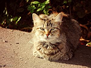 Работа в фотошоп-солнечный кот. Ярмарка Мастеров - ручная работа, handmade.