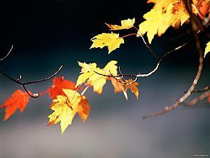 Осенний марафон. Начинаем публикацию отчетов о МК | Ярмарка Мастеров - ручная работа, handmade