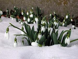 Весна!!! | Ярмарка Мастеров - ручная работа, handmade
