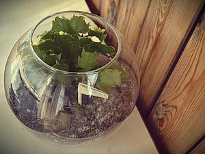 Мастер-класс: деловой флорариум в стиле минимализм. Ярмарка Мастеров - ручная работа, handmade.