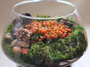 5 шагов по созданию флорариума. Мини-сад за стеклом своими руками | Ярмарка Мастеров - ручная работа, handmade