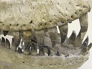 Начальник отдела драконовых костей | Ярмарка Мастеров - ручная работа, handmade