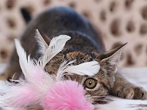 Дразнилки для кошки! | Ярмарка Мастеров - ручная работа, handmade