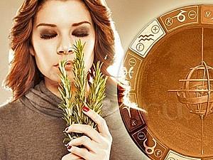 Ароматный гороскоп для женщин | Ярмарка Мастеров - ручная работа, handmade