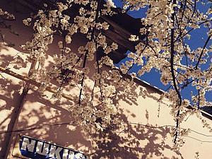 Весна идет, весне дорогу!   Ярмарка Мастеров - ручная работа, handmade