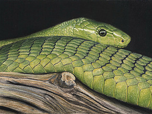 Рисуем пастелью змею. Ярмарка Мастеров - ручная работа, handmade.