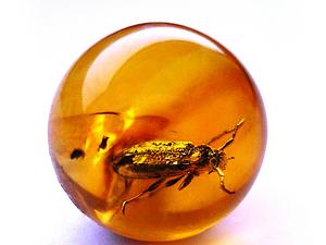 Янтарный плен доисторических насекомых. Ярмарка Мастеров - ручная работа, handmade.