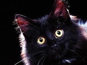 Про любовь и черную кошку. | Ярмарка Мастеров - ручная работа, handmade