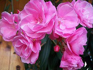 Любите ли вы цветы так как люблю их я... | Ярмарка Мастеров - ручная работа, handmade
