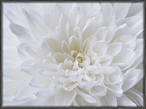 Алебастровый, молочный, амиантовый и другие оттенки белого цвета. Ярмарка Мастеров - ручная работа, handmade.