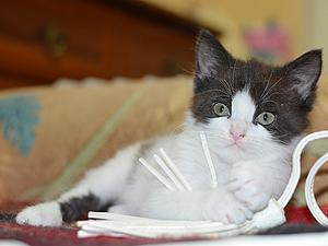 Котенок в добрые руки) Подбробности по ссылке... | Ярмарка Мастеров - ручная работа, handmade