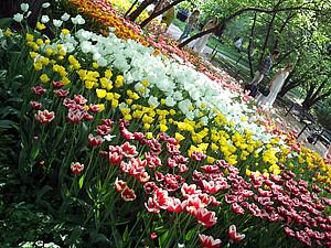 Цветущее вдохновение из Аптекарского сада в Москве   Ярмарка Мастеров - ручная работа, handmade