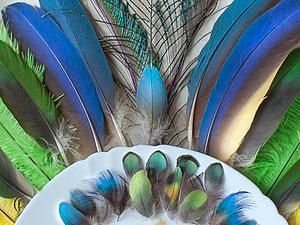 Распродажа редких перьев! | Ярмарка Мастеров - ручная работа, handmade