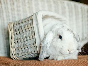 Анонс: Фотосессия с милым кроликом:) | Ярмарка Мастеров - ручная работа, handmade