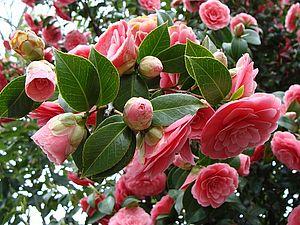 Растения для любви и счастья - Тридевятое Царство