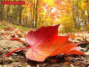 Правила на эту осень | Ярмарка Мастеров - ручная работа, handmade