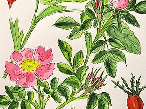 Кабинет Жюля Верна: ботанические иллюстрации   Ярмарка Мастеров - ручная работа, handmade