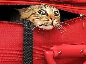 Внимание! Внимание! Розыгрыш кота в мешке! Только 1-го апреля! | Ярмарка Мастеров - ручная работа, handmade