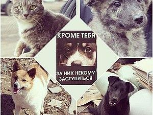Благотворительный аукцион в помощь приюту для бездомных животных