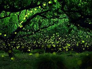 Волшебство  летней ночи: как светлячки творят чудеса | Ярмарка Мастеров - ручная работа, handmade