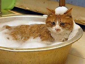 А, что ж мы не люди, что ли?.. Или заметка о зверском мытье! :-)   Ярмарка Мастеров - ручная работа, handmade