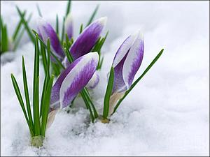 Скоро весна! | Ярмарка Мастеров - ручная работа, handmade
