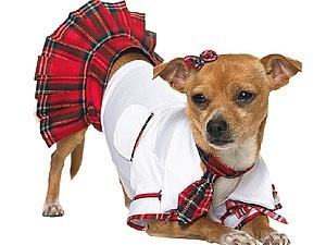 Собачья мода: от Древнего Рима до наших дней. Ярмарка Мастеров - ручная работа, handmade.