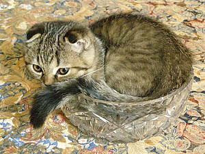 Кошкин дом. | Ярмарка Мастеров - ручная работа, handmade